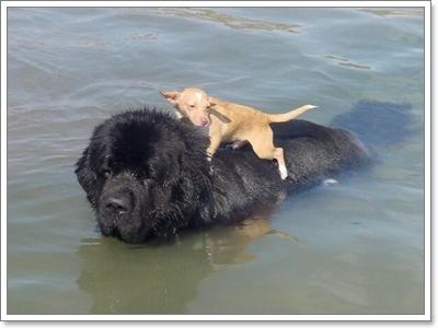 เรื่องราวน่ารู้เกี่ยวกับน้องหมาเพื่อนซี้สี่ขาของเรา